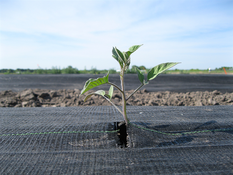 Clariant's solutions awarded with the OK compost INDUSTRIAL and OK biodegradable SOIL certifications support the development of industrially compostable plastics and biodegradable coatings for agriculture. (Photo: Pixabay)